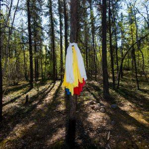 Spring Camp Digital Lodge Hjm 8